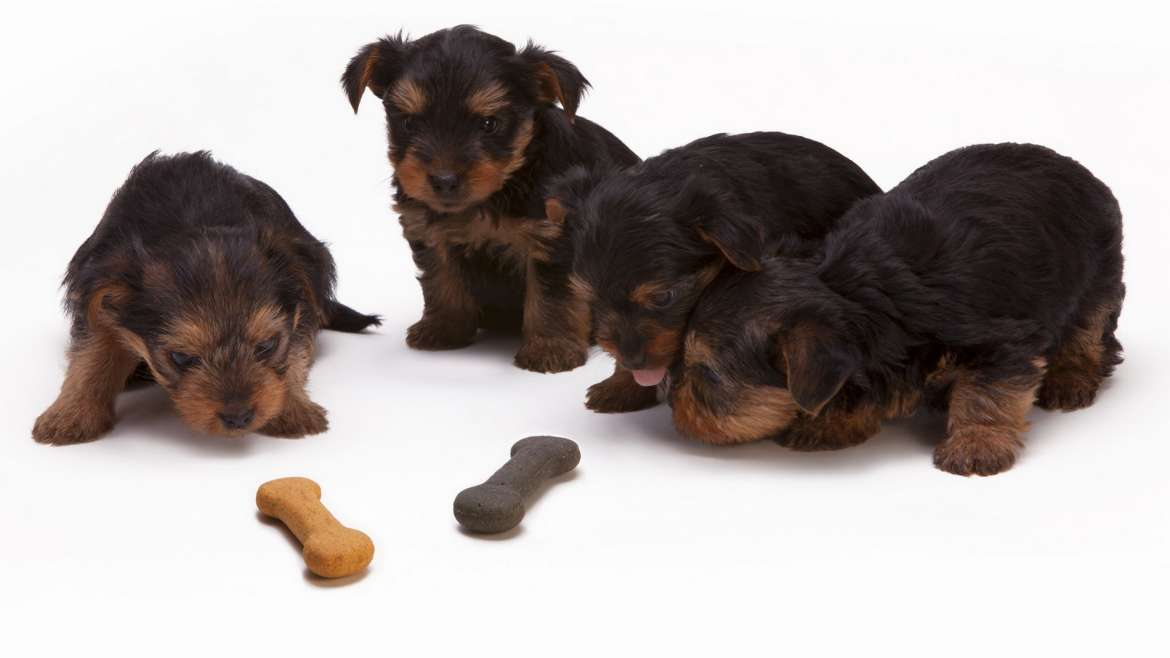 Dangerous Foods For Your Pets