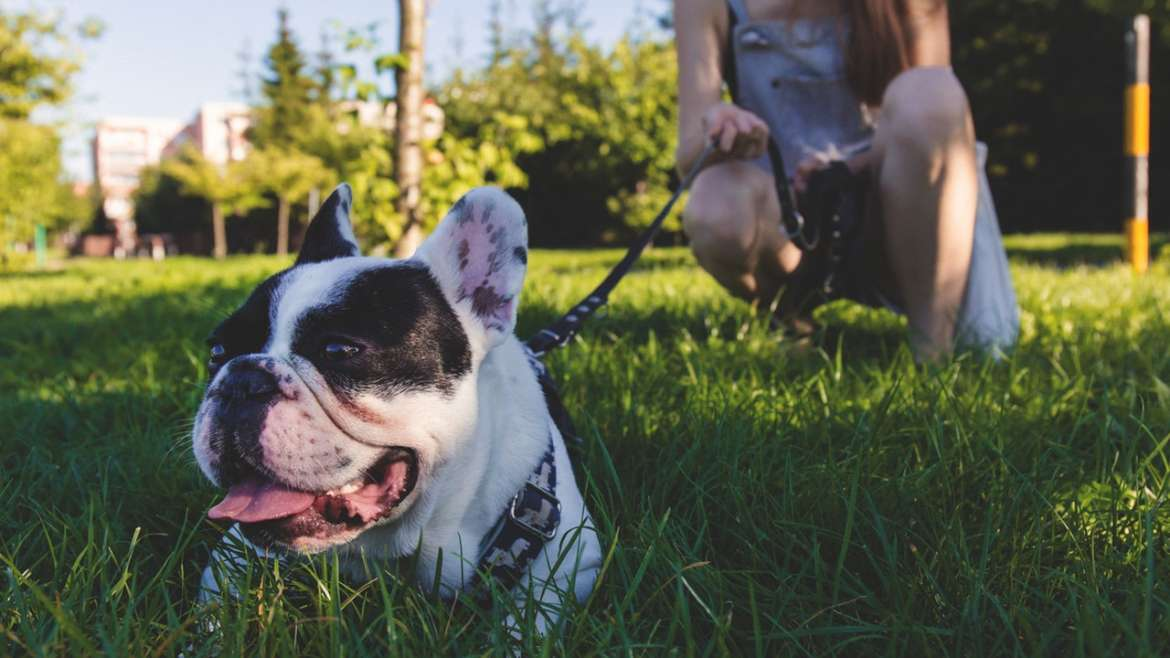 Spring Activities for your Dog